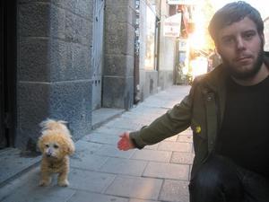 """HUND. En hund med en misstänkt syntetisk gul färg, vars ägare jobbar i en frisersalong på Folkungagatan. """"Den ser ut som en blandning mellan en ostkrok och ett smörpopcorn. Det syns inte så bra på bilden men den är verkligen lik ett popcorn""""."""