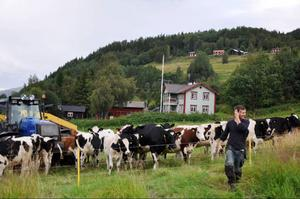 Olof Östling, anställd i Åre bondgård, tycker jobbet har blivit mycket roligare