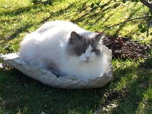 när fågelbadet i betong är ledigt ligger katten Tjockis i solen..!?