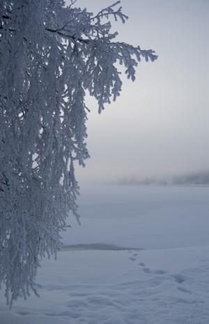 Frostig gren, kortet är taget på gångbron in mot Östersund, vy över Storsjön.