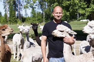 Paul Nicholls på Norrängens alpacka.