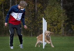 9-åriga golden retrievern Nova är en pensionerad tävlingshund. Hon springer slalom tillsammans med 16-årige Kalle Tangfelt, om än i något långsammare takt än hundarna som är med i helgens elittävlingar på Jycketorp.