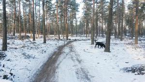 Spärrat crosspår. I förra veckan upptäcktes en stålvajer som spänts upp över den skogsväg som crossåkarna brukar använda.