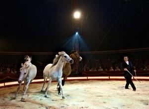 Hästarna var ståtliga. I manegen sprang både arabiska fullblod och frieserhästar.