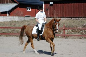 Monica O-Nils red dotterns ponny Micado bland de stora hästarna. De gjorde Edsbyekipaget så bra att det blev en tredje plats i lätt A:3.