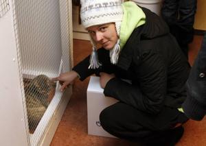 """– Jag är så kär i henne, men jag har redan två katter och en hund, säger Linda Sahlström och gosar med katten Lill-Sara genom burens galler.Skylten med texten """"Bokad"""" på Lill-Saras bur vittnar om att hon snart ska få ett nytt hem."""