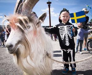 Den livs levande bocken Kåre fanns vid Gruvan till glädje för unge Julius Aspgren.