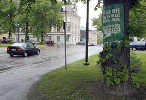 På träd får man definitivt inte affischera, som miljöpartiet gjort här vid rådhuset.