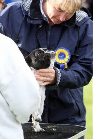 Domarens argusöga kontrollerar bettet och annat på varje hund.  Foto: Håkan Degselius