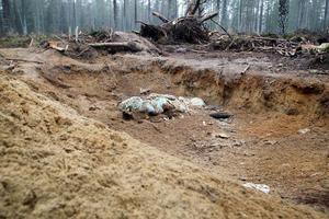 Både hushållsavfall och älgkadaver har lämnats i groparna i skogen.