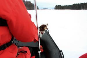 Här anar sjöräddningshunden Salt att någon på ön i Runn behöver hjälp. Hunden markerar med ett skall.