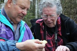 Från Härnösand kom två av Sveriges största svampkännare och på bilden studerar Stig Norell och Hans Marklund en bit av en timmerticka som man hittade. Hans Marklund har skrivit flera böcker om svamp.