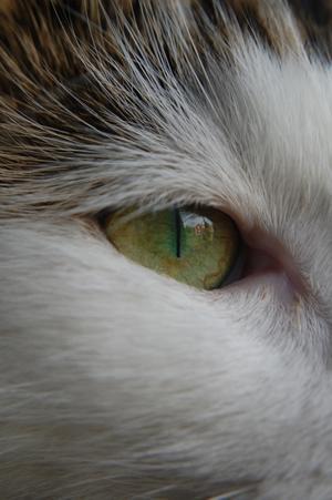 Lekte lite med kameran och hade katten Stumpan som modell då hon satt i fönstret. Blev nöjd över bilden och framkallade den. Det var inte förrän då jag såg vad kameran hade fokus på, hennes ögon. Tittar man noga så kan man även se att grannhuset speglas i hennes ögon. Det kallar jag verkligen blick i fokus.