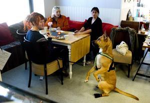 Susanna Lehtonen har åkt direktbuss från Bredsand med sin stora blandrashund Hector. Den Scooby Doo-porträttlike Hector sitter stolt bredvid matte när hon äter sin macka.