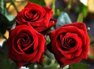 Tre blommor betyder