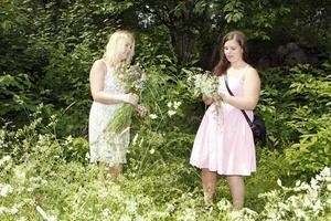 Anna Sandström och Veronica Pettersson ägnade sig åt blomplockning vid Djäkneberget.