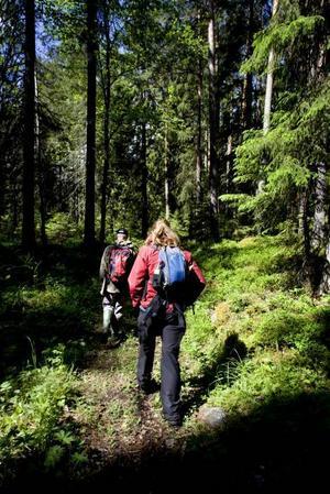 NJUTBART. Det smidigaste sättet om du vill njuta av Gävles nyaste naturreservat är att följa Gästrikeleden.