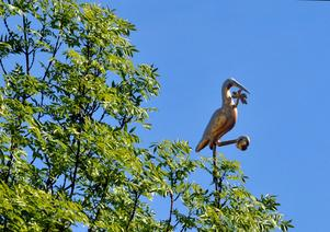 Ofta bruka kyrktuppar vara placerade högst upp på tornspiran, men inte  på Ängsö. Här sitter den på en liten spira på kyrktaket i höjd medträdens lövverk.