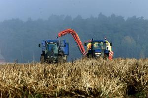 Ekologiskt jordbruk främjar den biologiska mångfalden, skapar tillväxt och ökar lantbrukets lönsamhet, skriver Jonas Carlberg.