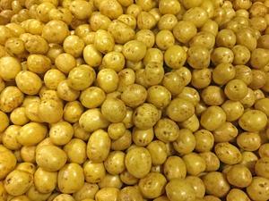 Risk för potatisbrist i sommar. Arkivbild. Foto: Helene Berzelius