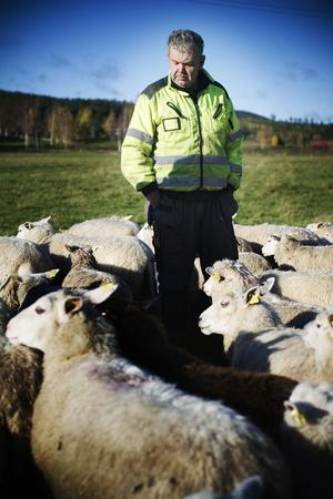 Kjell Andersson funderar hur mycket det ska få kosta med varg inpå knutarna.