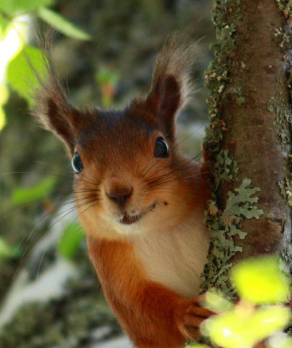 Den söta ekorre kom springandes upp i ett träd när jag var ute och gick.