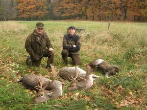 När gänget från Ånge är i Tjeckien jagar de lite olika djur. Anders Söderberg och Henrik Persson har bland annat jagat såväl dovhjort som mufflo.