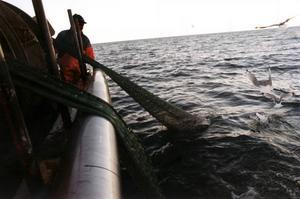 Svensk fiskepolitik är i nuläget en katastrof. Subventionerna göder utfiskning och stöder bränsleslukande fartyg som bidrar till försurning genom sina utsläpp av svaveldioxid. Och Sverige är delaktig i EU:s fiskefond som är ökänd för att ha köpt upp tusentals ton fisk och skaldjur för att sedan slänga dem som avfall – allt för att hålla uppe priset på fisk. Det skriver Simon Knutsson, riksdagskandidat för Djurens Parti.
