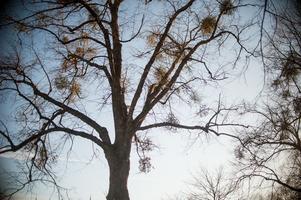 Trädet på bilden har inget med det aktuella fallet att göra.