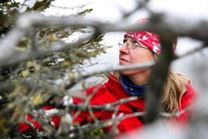 Lisa Öberg jobbar deltid på länsstyrelsen i Jämtlands län. Hon har bland annat varit redaktör för den bok om Sonfjället som togs fram lagom till jubileet. Hon är doktorand och ska efter jul presentera första delen av sin doktorsavhandling som handlar om gamla fjällgranar och om hur trädgränsen i Jämtland, Härjedalen och Dalarna har klättrat uppför kalfjället de senaste 100 åren. Närmare 70 olika fjäll ingår i hennes avhandling. Sonfjället är ett av dem och hennes favorit.