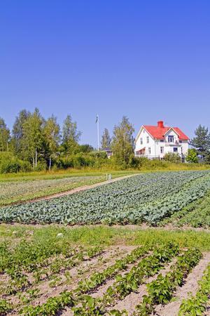 Rams hus ligger precis i anslutning till odlingen.