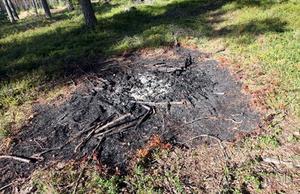 Sådana här fläckar efter eldstäder ligger överallt på makarna Lindgrens mark just nu. Branddoft hänger kvar i luften fastän det var över en vecka sedan bärplockarna lämnade området.