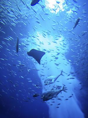 Snorkling och dykning är stort på Maldiverna. Utanför ön Moofushi kan man se det mesta av det marina livet i Indiska Oceanen.