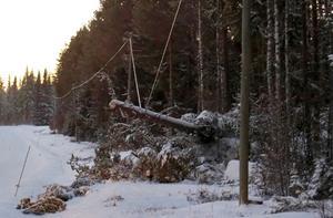 Träd som fallit över ledningar är ett vanligt problem i samband med strömavbrott efter storm. Bilden från trakterna av Rissna.
