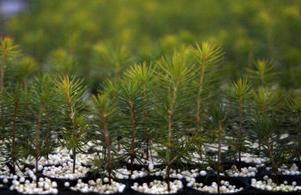 Det finns fler än ett sätt att bedriva skogsbruk på, skriver insändaren.