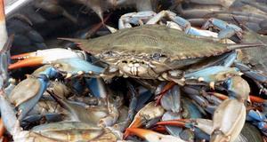 En hink med krabbor hör till det som hotellgäster glömt kvar på rummet.