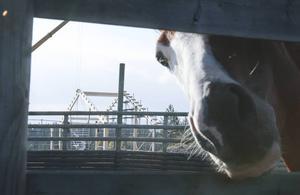 På Jan Perssons gård finns det elva hästar i dag.