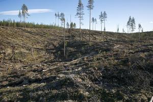 Brännvinsberget i Ore skogsrike. Foto: Arkiv/ Klockar Mattias Nääs