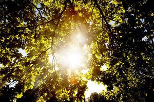 Sommartolkningar: i hängmatta under trädtoppar