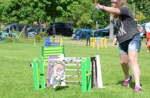 I kamp om poängen. Att riva på ett hinder ger 1 fel. Kaninen Tipi misslyckas precis med att forcera detta hinder felfritt. Kaninförare Julia Persson hejar på sin fyrbenta tävlingskamrat.