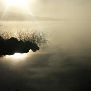 Dimman ligger tät över aspen och solen vill bryta igenom. En underbar morgon.