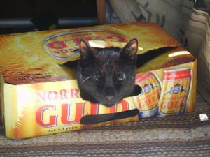 Lucifer älskar att ligga i kartonger.