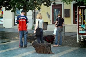 Ungerns nationalhund puli syns överallt. Ungern är ett annorlunda europeiskt land som förtjänar fler besökare utanför huvudstaden. Husen ser inte alls ut som i andra delar av Europa, luften är fuktig och de verkar odla grönsaker överallt. Foto:Johanna Lundin