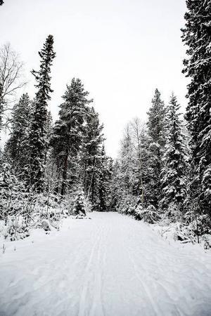 Bristen på natursnö, den milda vintern och stormen Ivar har satt sina spår. Sett till den totala kapaciteten är det få längskidspår som är öppna i Östersunds kommun.