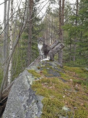 Lisa trivs i skogen där hon kan slappna av.