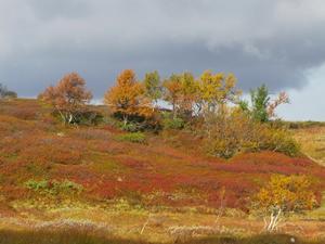 Vandring på Kariknallarna i Härjedalen visar naturen upp höstens alla färger på en och samma gång