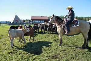 Agneta Svantesson ser till att plocka ut rätt ko och driva ut den.