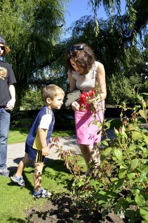 Smell the flower. Ann Andersson och Elias Holm bland Stadsparkens rosor.