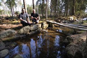 Vattenväg. Även i skogen nedanför Puttbo är det nyröjt. Här syns den grävda och stenkantade kanalen som ledde vattenkraft till Falu gruva.