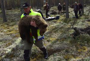 De sovande björnungarna bars till den väntande helikoptern för att återförenas med familjen och väckas ur nedsövningen i lugn och ro med dem. Foto: Björn Rehnström